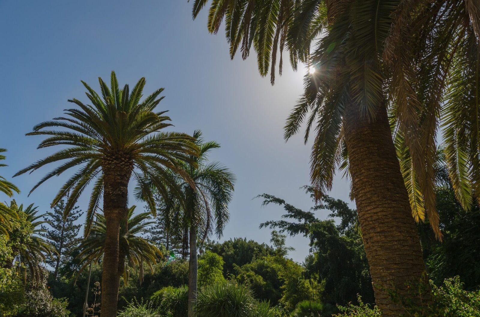 Run op zonvakanties naar Canarische eilanden